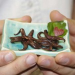 chocolate-covered-squid